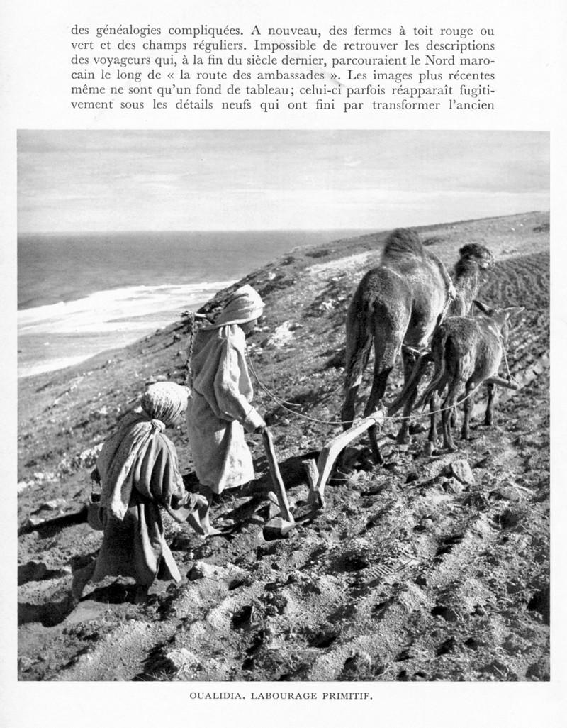 LE MAROC (J. - L. Miège) - Page 4 Maroc101