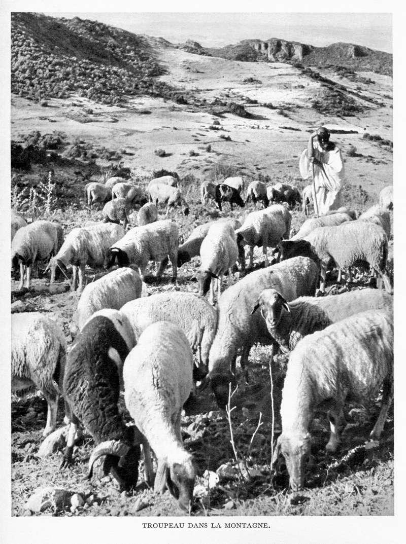 LE MAROC (J. - L. Miège) - Page 7 Maroc175