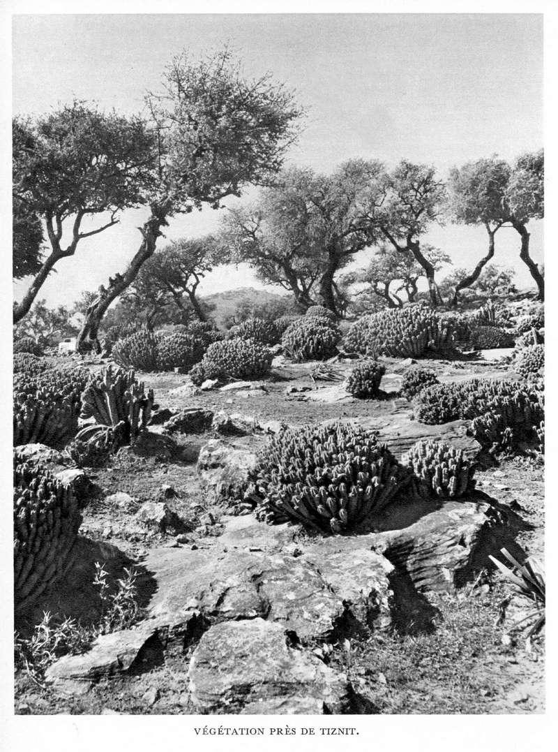 LE MAROC (J. - L. Miège) - Page 9 Maroc224