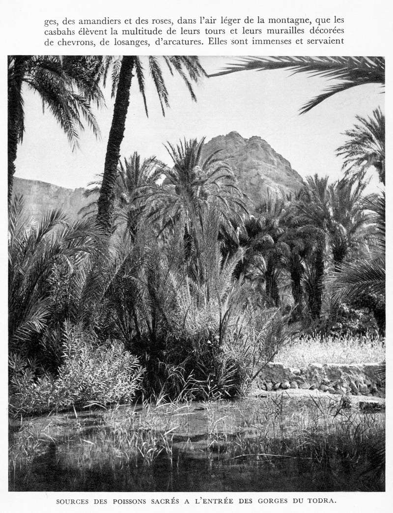LE MAROC (J. - L. Miège) - Page 9 Maroc229