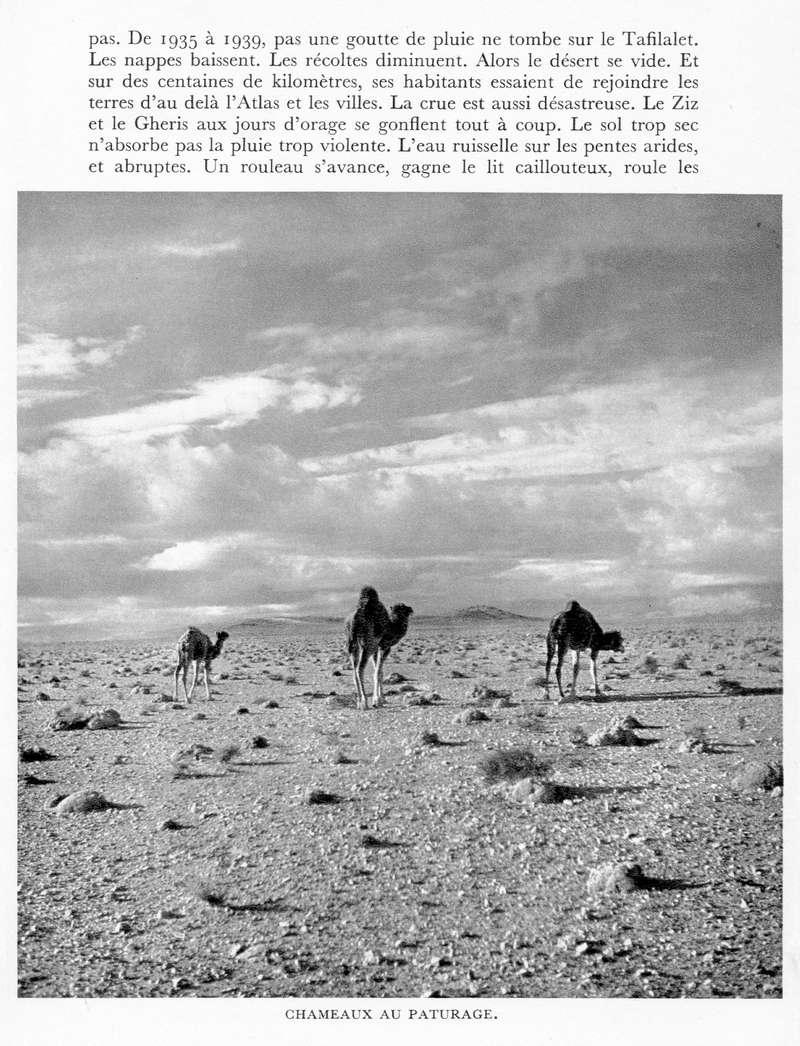 LE MAROC (J. - L. Miège) - Page 9 Maroc239