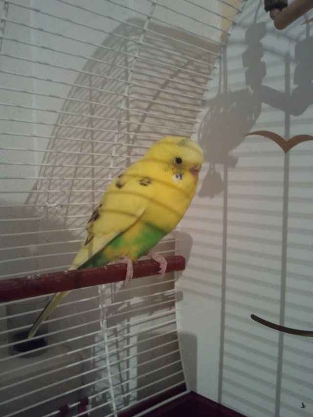 Cage pour notre perruche ! 20120910