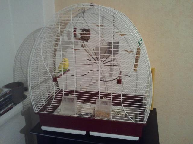 Cage pour notre perruche ! 20120911
