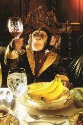 Ultimate reality - Page 3 Monkey10