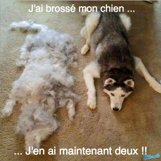 HUMOUR - blagues - Page 5 2a5dbe10