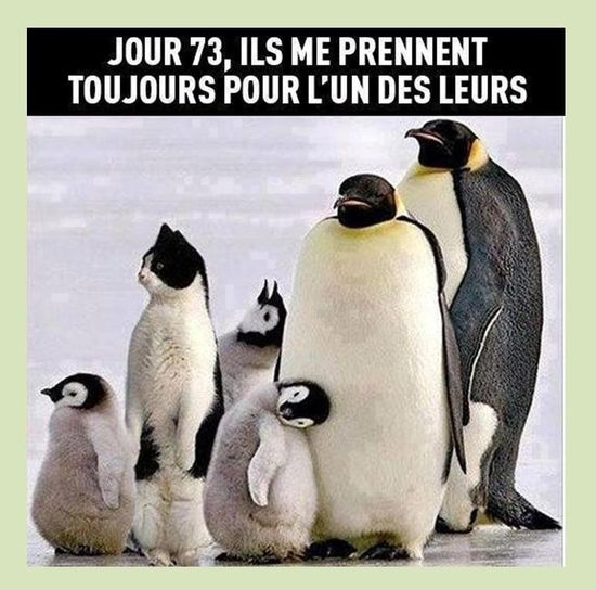 HUMOUR - blagues - Page 20 56b2ea10