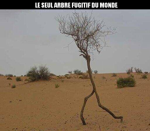 HUMOUR - blagues - Page 5 5c4ff310