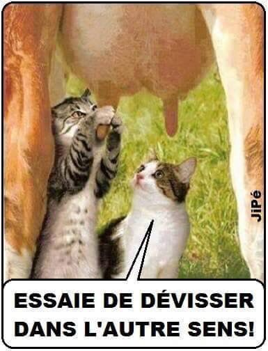 HUMOUR - blagues - Page 3 F69d6f10