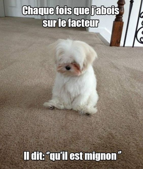 HUMOUR - blagues - Page 18 Fe499410