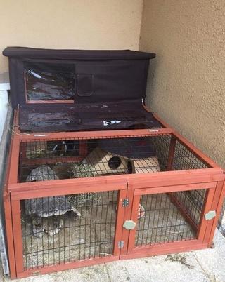 Mon chien a tué un lapin de compagnie - Page 2 Image113