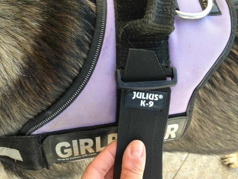 Sacoches pour harnais Julius K9 Image34