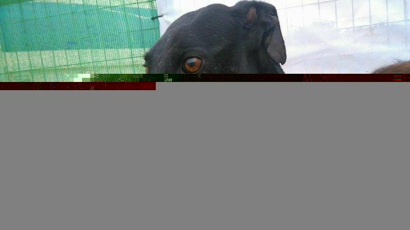 MORI, douce galga noire ♥ Morggg11