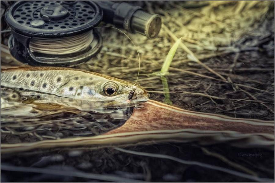 Fotografije ulova, ribe, oprema i dr. 16003110