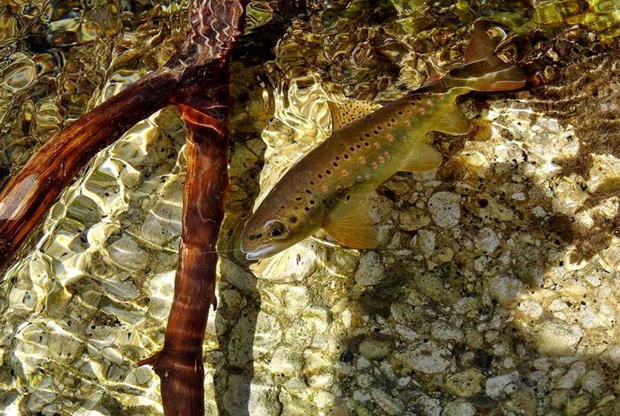 Fotografije ulova, ribe, oprema i dr. 17434910