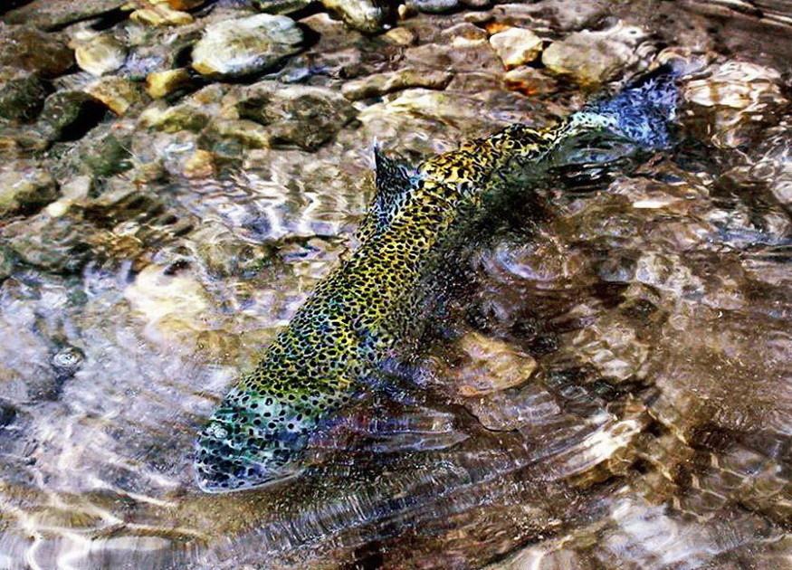 Fotografije ulova, ribe, oprema i dr. - Page 65 30201911