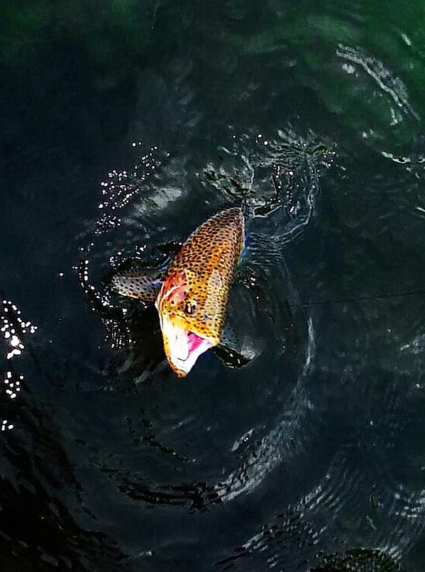 Fotografije ulova, ribe, oprema i dr. - Page 65 32791510