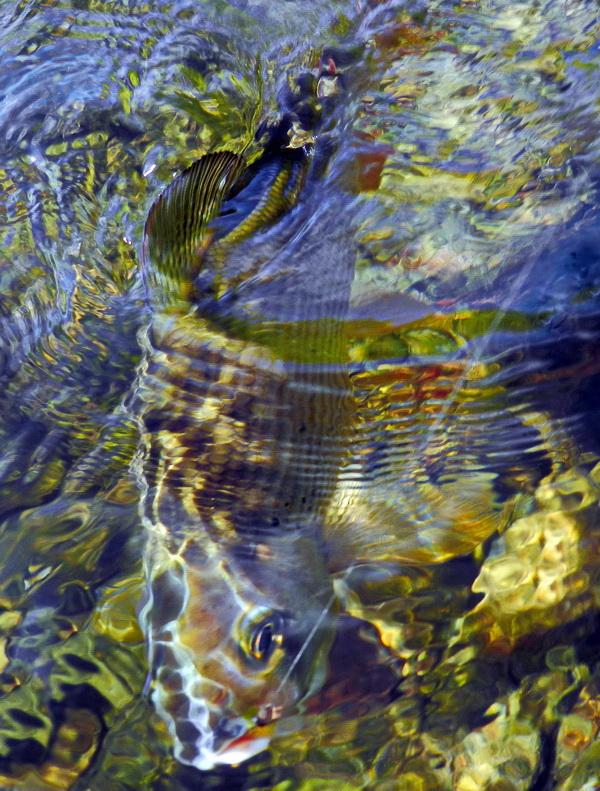 Fotografije ulova, ribe, oprema i dr. - Page 4 Dscn0016