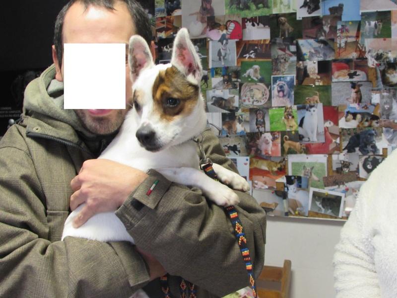Réservation de LEWIS maintenant LOULOU, croisé Jack Russel...et Adoption- Novembre 2016. 00215