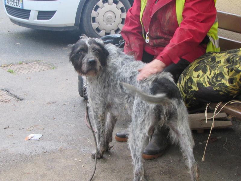 LILI - x griffon 6 ans blanc moucheté/noir- Refuge de la Picoterie à Crogis (02) 00815