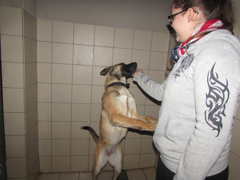 MIYA chienne 02815