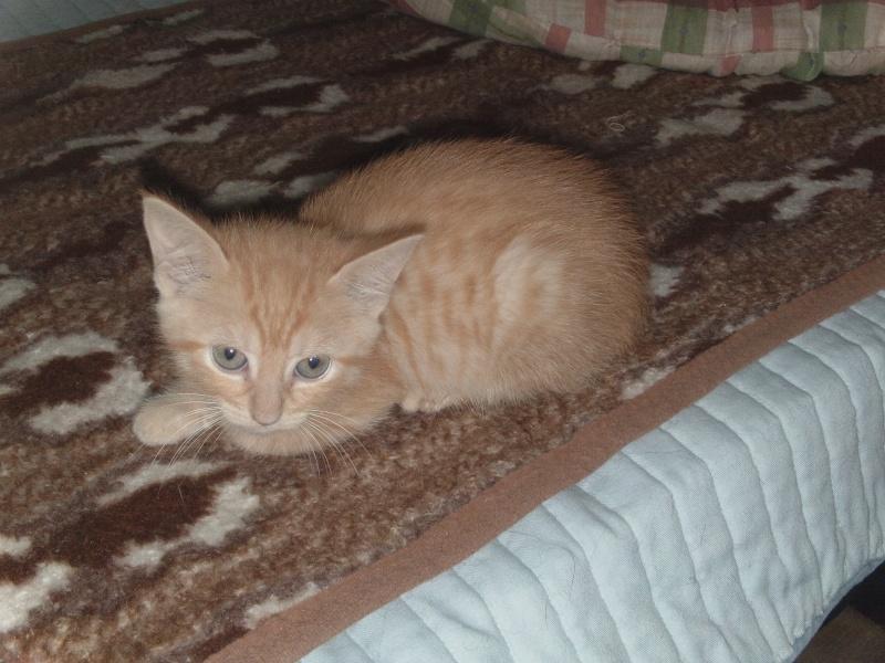 les chatons en nursery Dvci0138