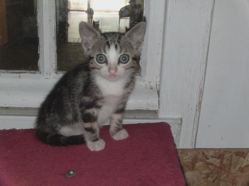 les chatons en nursery Dvci0139
