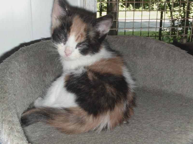 les chatons en nursery Dvci0140