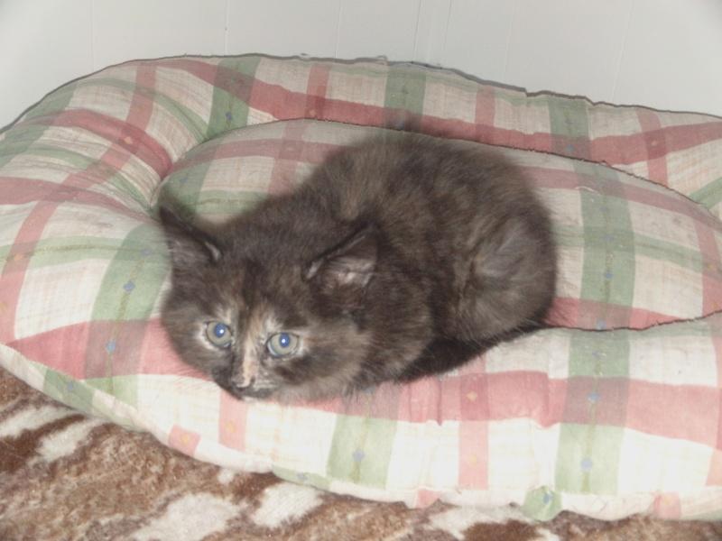 les chatons en nursery Dvci0141