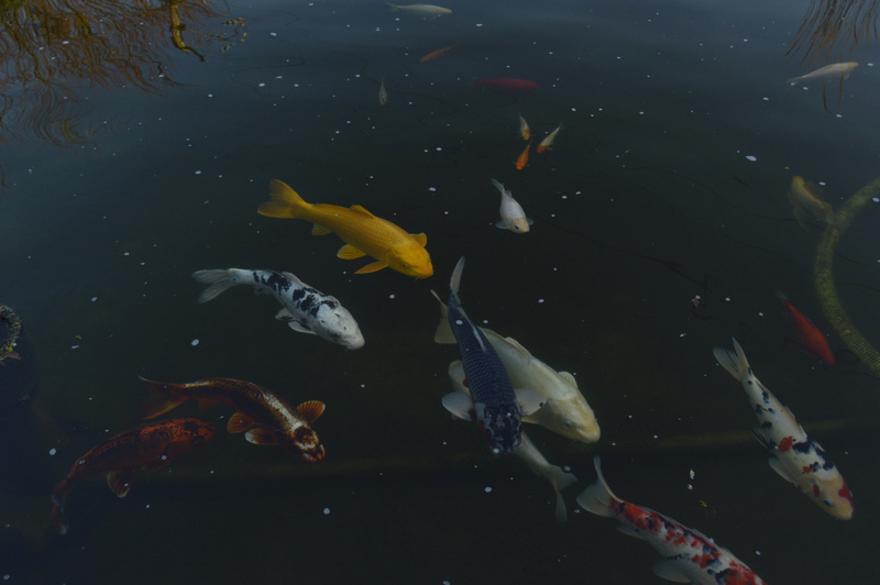 Bassin de 16000 litres _dsc0028