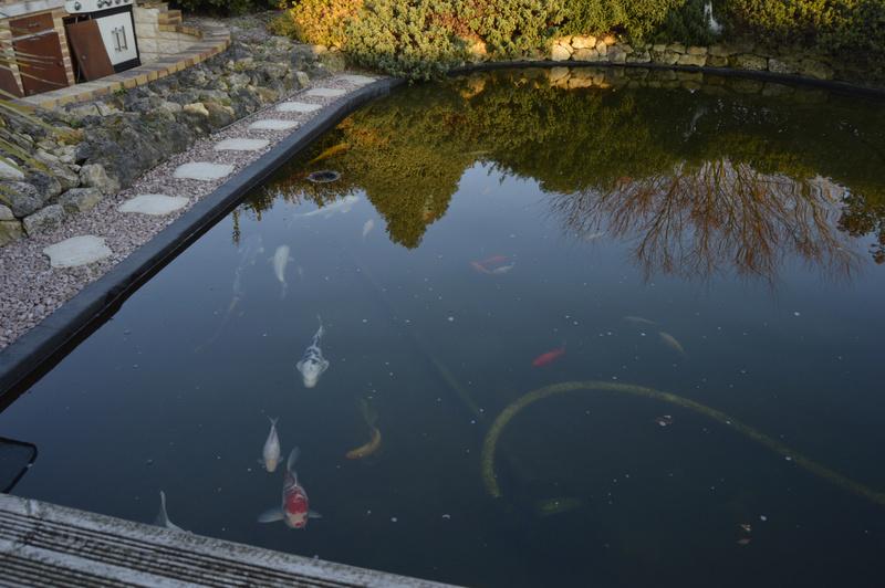Bassin de 16000 litres _dsc0029