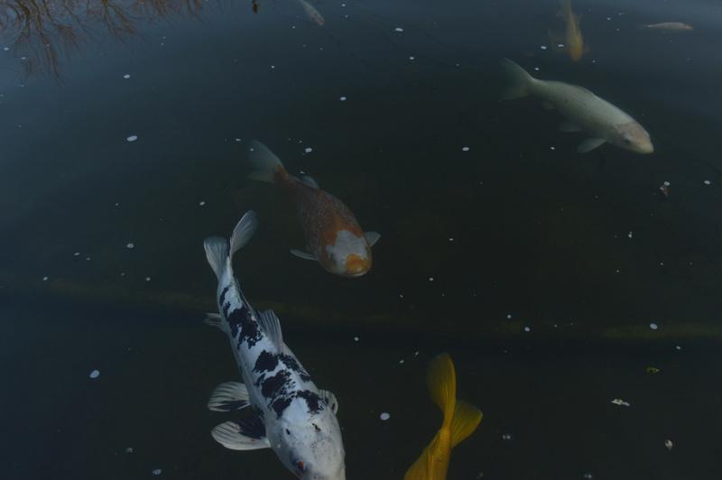 Bassin de 16000 litres _dsc0030