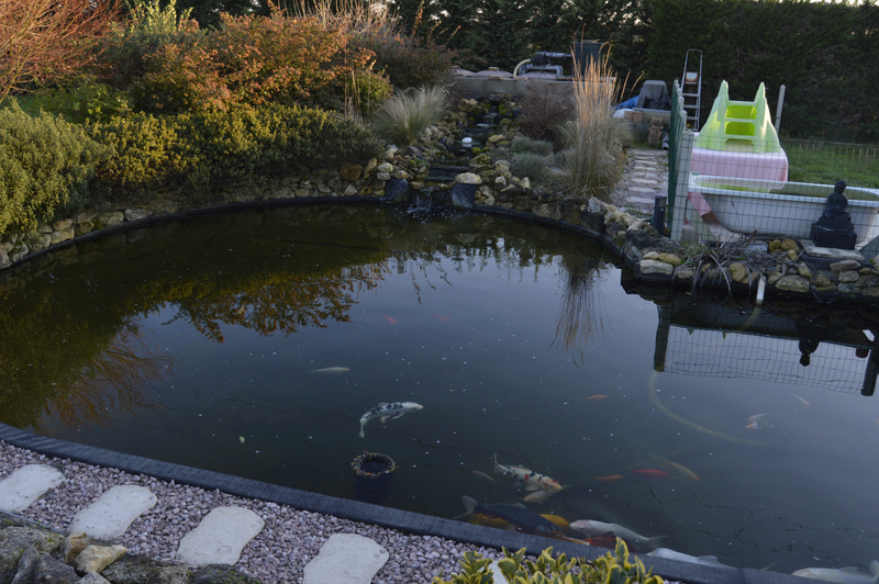 Bassin de 16000 litres _dsc0031