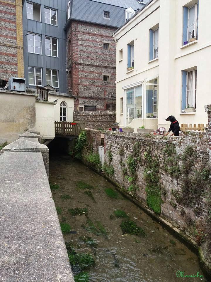 Au fil de la Veules (Seine Maritime) 1510