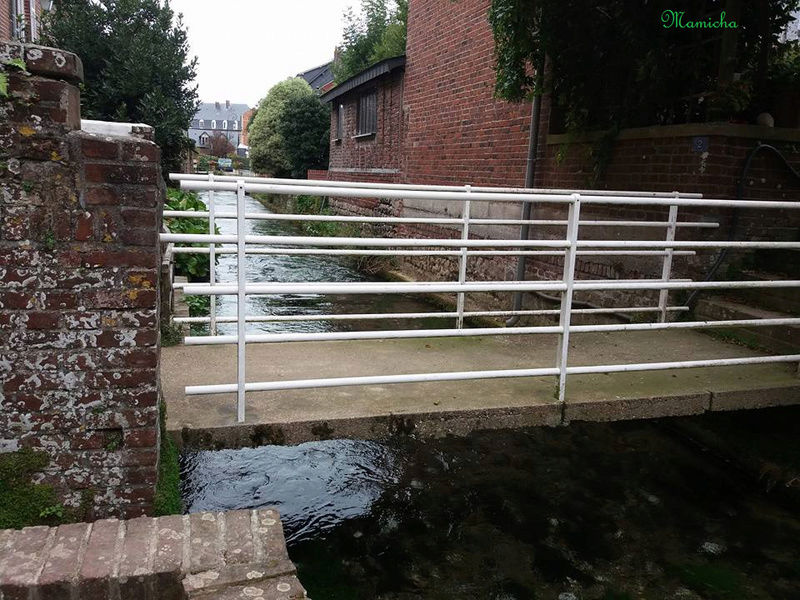 Au fil de la Veules (Seine Maritime) 2110
