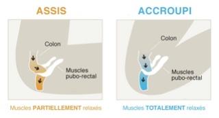 Retrouver une position physiologique aux toilettes Image29