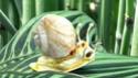 Snail création modèlisation escargot Snail10