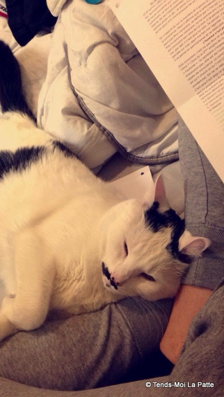 CHAT A ADOPTER : HALLY - chat mâle de 5 ans - Page 2 Mage-110