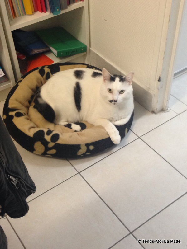 CHAT A ADOPTER : HALLY - chat mâle de 5 ans - Page 2 Mg_42310