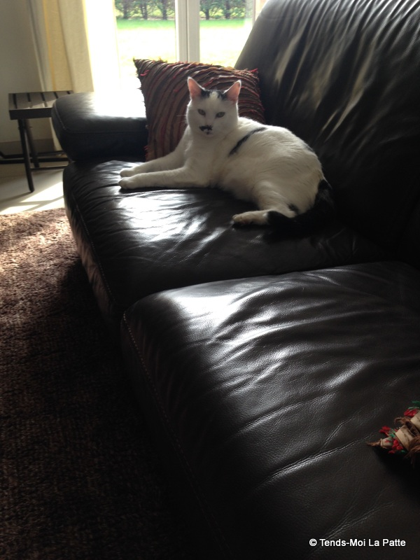 CHAT A ADOPTER : HALLY - chat mâle de 5 ans - Page 2 Mg_43111