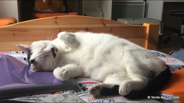 CHAT A ADOPTER : HALLY - chat mâle de 5 ans - Page 2 Mg_43511