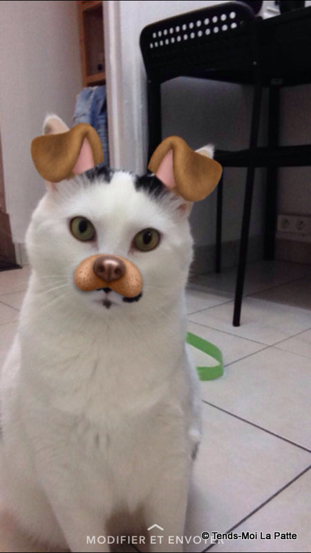 CHAT A ADOPTER : HALLY - chat mâle de 5 ans - Page 2 Mg_47310