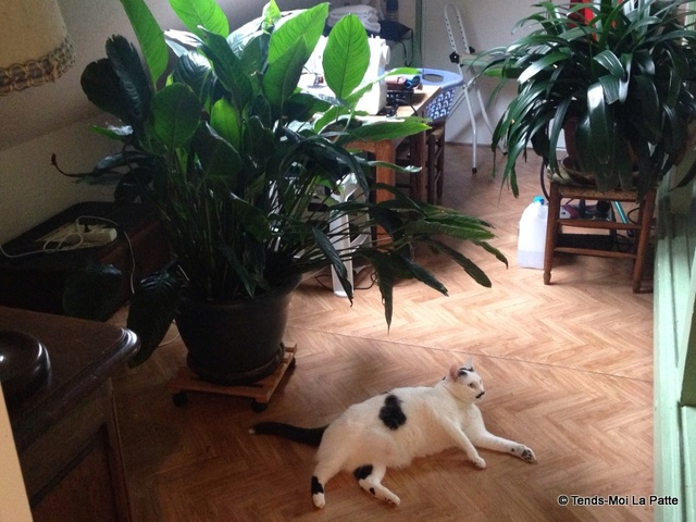 CHAT A ADOPTER : HALLY - chat mâle de 5 ans - Page 2 Mg_48410