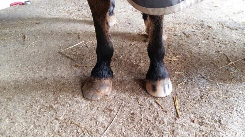 INDIANA - OI type poney née en 1994 - adoptée en juillet 2016 par Adeline 20170138