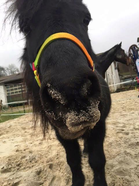 NOIROT - ONC poney né en 1997 - adopté en juillet 2016 par Leila Noirot10