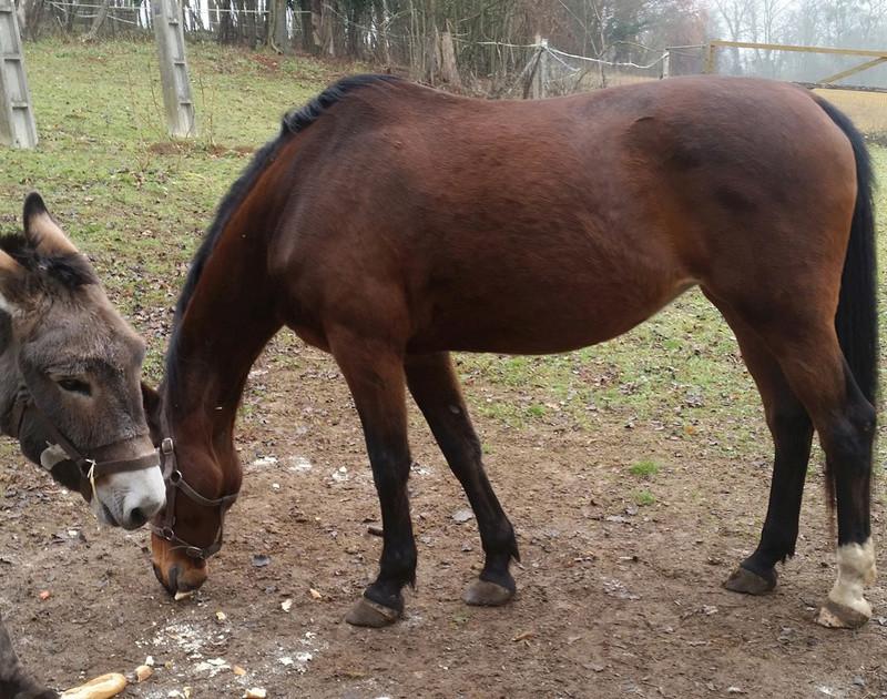 SAMARA - TF née en 2006 (DCD janvier 2019)  et OSCAR - âne né en 2003 - adoptés en mars 2012 par Maxime Samara10