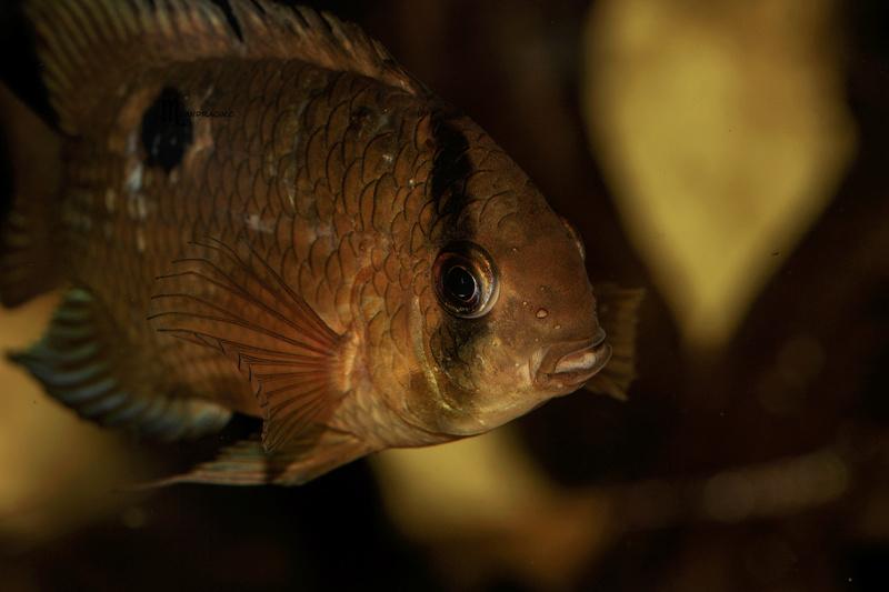 quelques poissons de chez richard Dsc09111