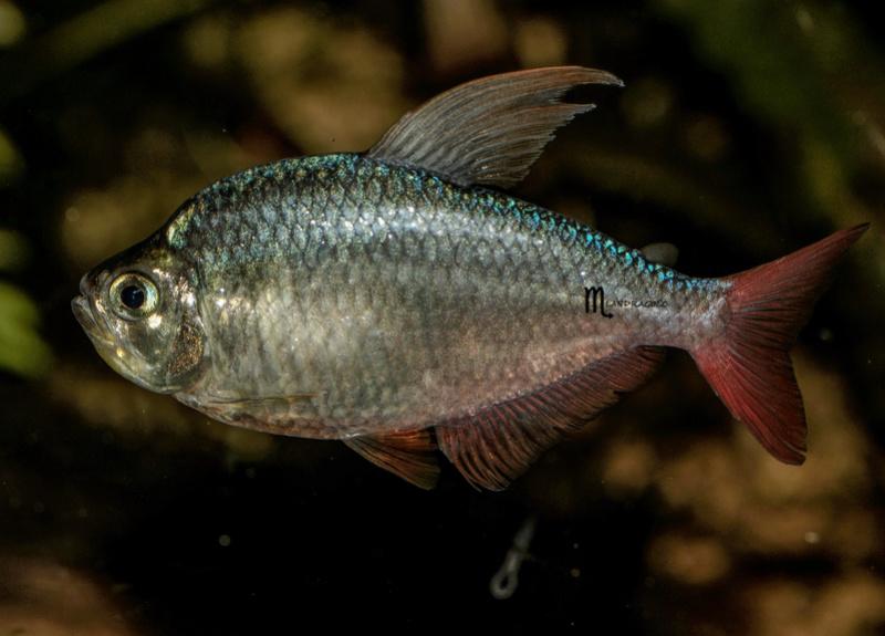 quelques poissons de chez richard Dsc09112