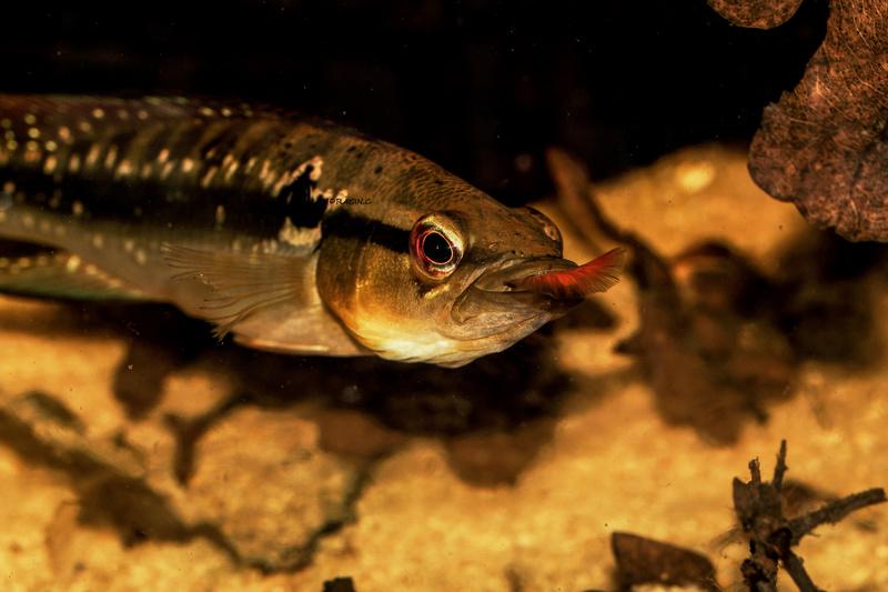 quelques poissons de chez richard Dsc09113