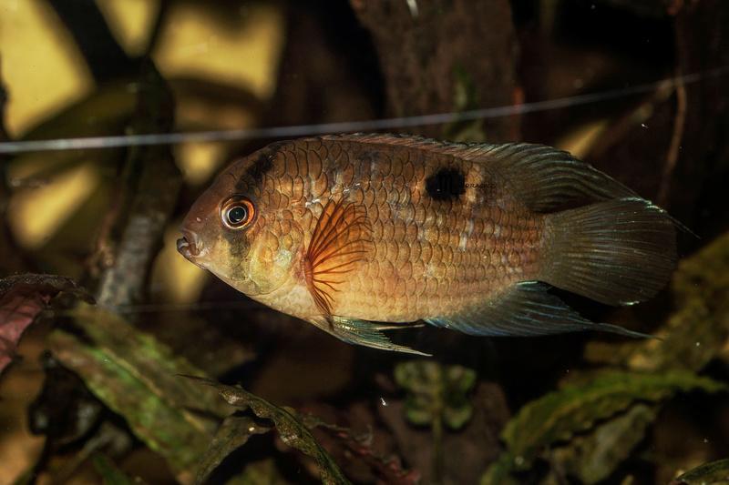 quelques poissons de chez richard Dsc09213
