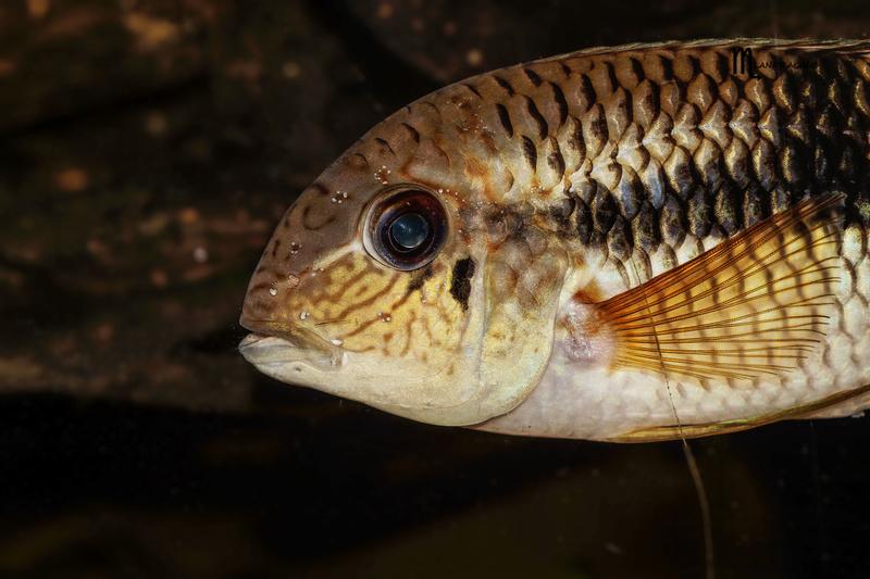 quelques poissons de chez richard Dsc09214